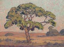 Pierneef 'Wilde Vye Boom, Sweetwaters, Louis Trichardt'