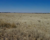View across the western portion of Onverwag RE/728, Welkom, Free State Province